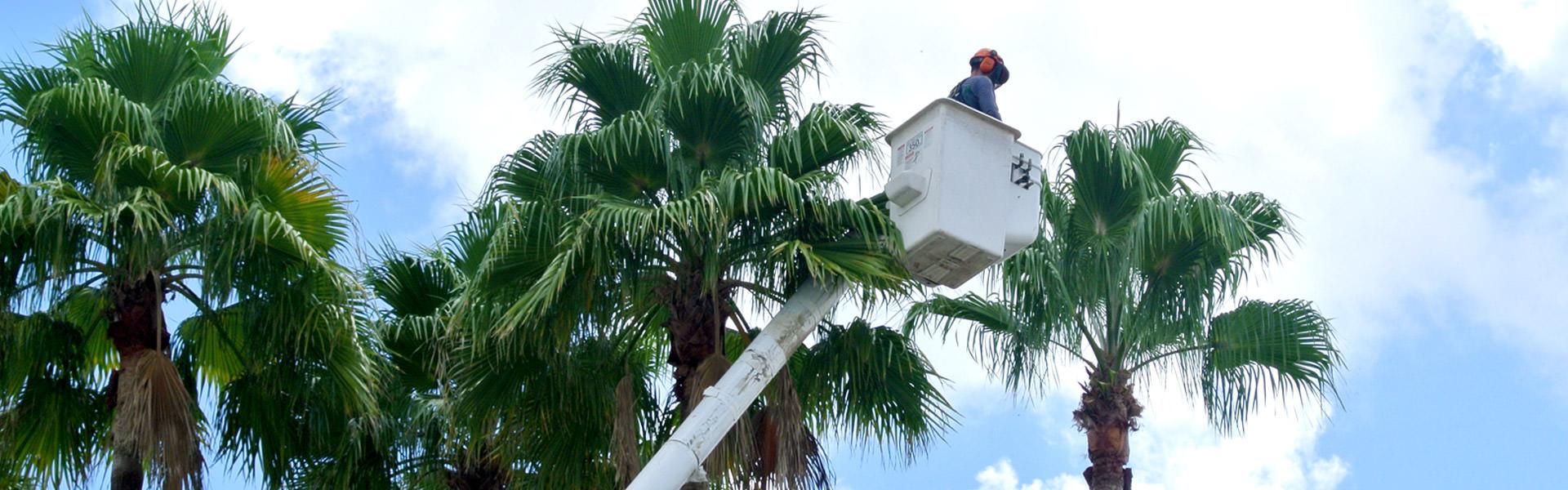 Palm Tree Maintenance Orlando