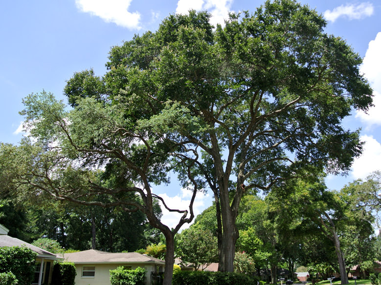 Residential Tree Trimming in Maitland, FL