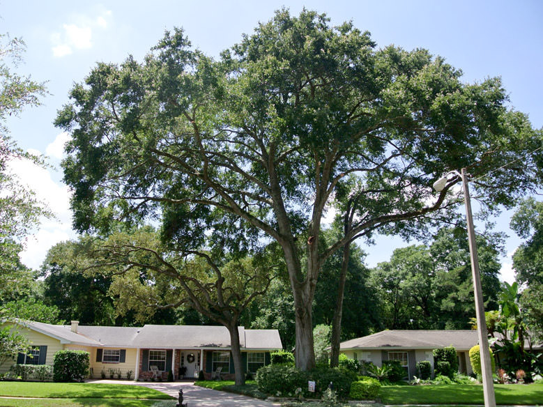 Residential Tree Pruning in Maitland, FL